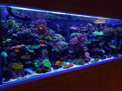 Charles Pace's 400 Gallon Tank